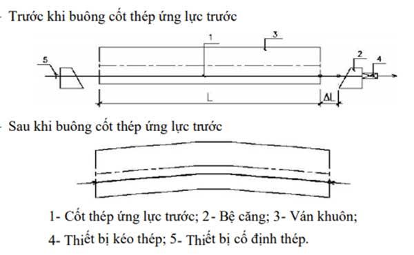 Sự-khác-biệt-giữa-căng-trước-và-căng-sau-1.jpg