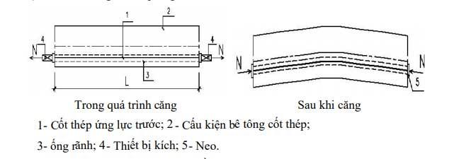 Sự-khác-biệt-giữa-căng-trước-và-căng-sau-2.jpg